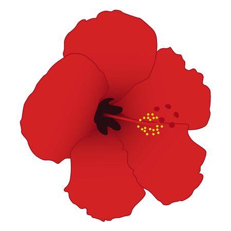 Red hibiscus isolated on white background. illustration. Illustration