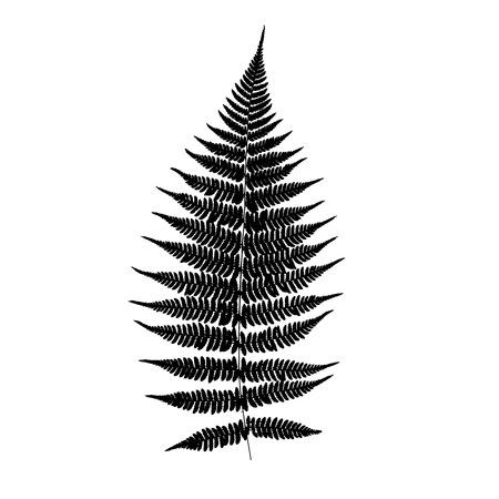 Fern leaf silhouette. Vector illustration