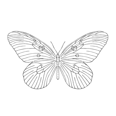 Hand drawn butterfly. Black and white vector illustration for coloring. Illustration