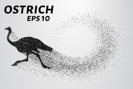 flightless: Ostrich from the particles. The ostrich consists of small circles. Illustration