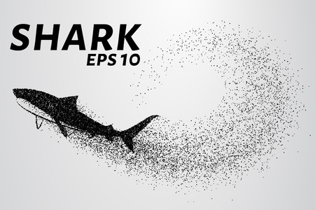 carcharodon: The shark from the particle. The silhouette of the shark is of little circles.