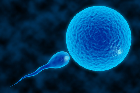3d illustration of sperm and fertile human egg. Fecundation. Insemination concept. In vitro fertilization