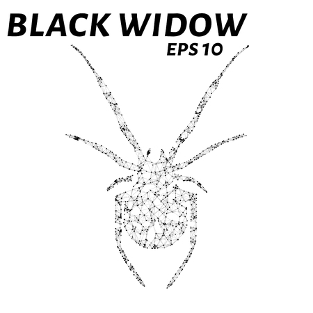 consist: Black widow consists of points, lines and triangles. The polygon shape in the form of a silhouette of a spider on a white background. Vector illustration