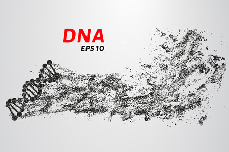DNA from the particles. Silhouette of DNA consists of small circles Illustration