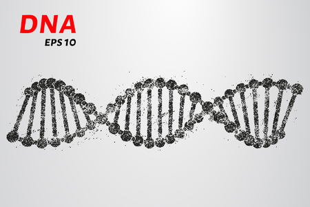 clone: DNA from the particles. Silhouette of DNA consists of small circles Illustration