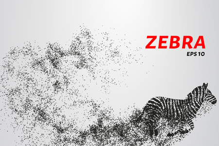 Zebra, particle divergent composition, vector illustration. Silhouette of a zebra from particles