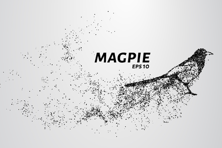 Magpie of particles. The magpie consists of circles and points. Vector illustration