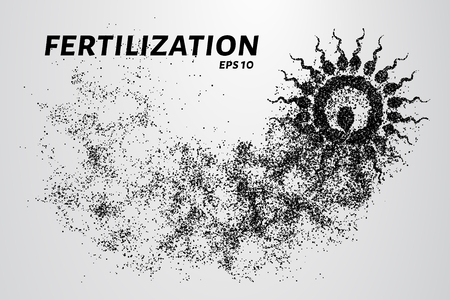 semen: Fertilization of the particles. The sperm consists of circles and points. Vector illustration