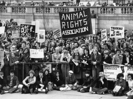 protestors: London, England - March 11, 1978 - Animal rights protestors in Trafalgar Square  to demonstrate against seal pup hunting in Newfoundland.