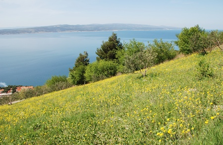 A flower filled meadow on the hills above Brela on the Makarska Riviera of Croatia  photo