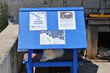 animal welfare: Paxos, Greece - June 14, 2014 - A cat feeding station for feral cats at Loggos on the Greek island of Paxos. The station is run by PAWS (Paxos Animal Welfare Society) which was formed in 2005 to help the islands animals.
