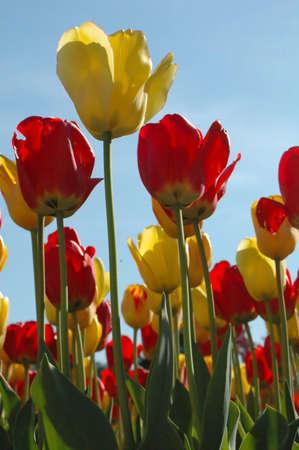 veiw: Tulips eye veiw