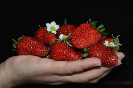 paleolithic: Fresh strawberries in hand