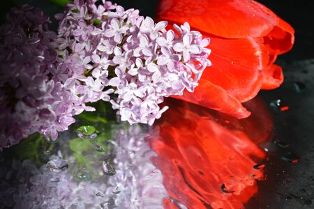 lavender coloured: Beautiful flowers with reflection, tulips and lilacs