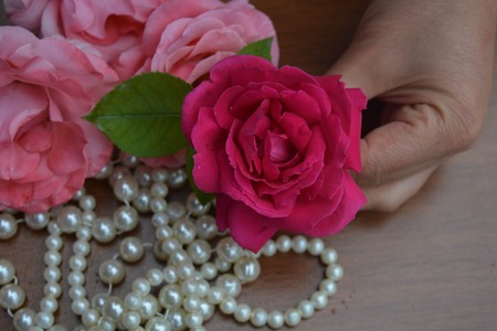 En vacker ros och kvinna hand