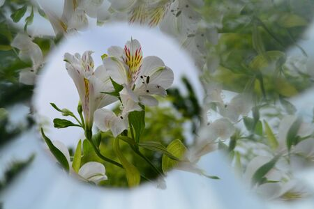 Abstract background, flowers, kaleidoscope effect, plant