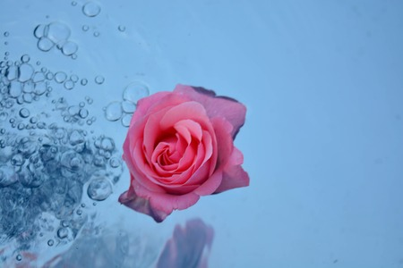 Roses reflected in water