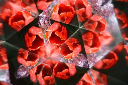 Abstract background, flowers, tulip, kaleidoscope effect
