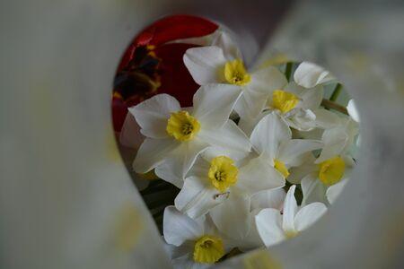 Natural flower background, heart