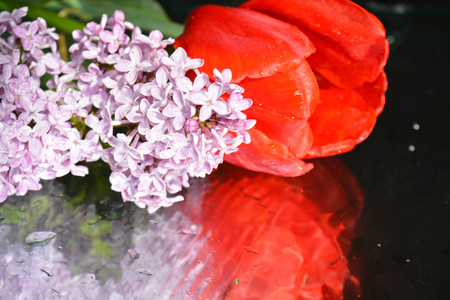 Beautiful flowers with reflection, tulips and lilacs