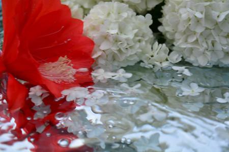 De belles fleurs reflétées dans l'eau pure Banque d'images - 76934278