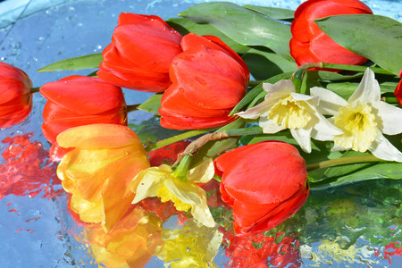 Flowers, reflection