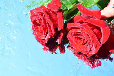 Beautiful roses reflected in pure water
