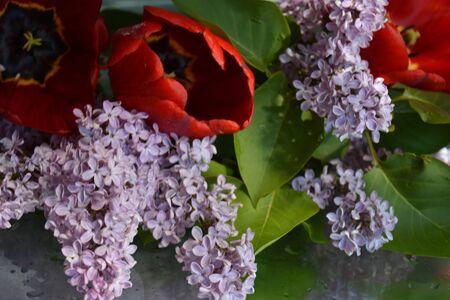 Beautiful flowers, lilacs