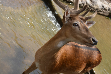 A beautiful deer, nature, animal, mountains, male, natural