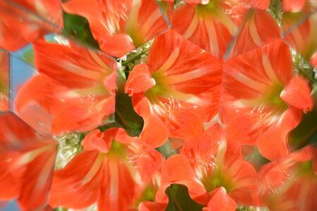 Abstract background,  beautiful flowers, nature, kaleidoscope ef Stock Photo