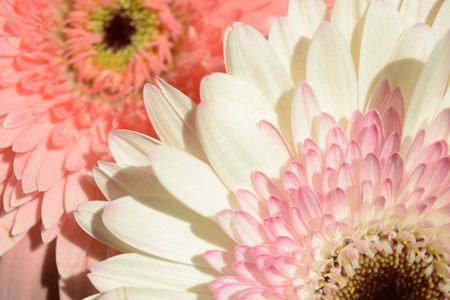 botan: Natural background, flowers, colorful, red, white, pink