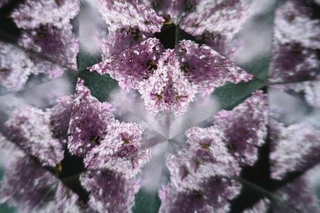 Abstract natural background, kaleidoscope effect, flower, lilacs