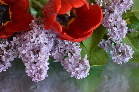 Beautiful flowers, lilacs, reflection, natural background, tulips