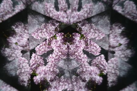 drops of water: Abstract background,  beautiful flowers, nature, kaleidoscope effect Stock Photo