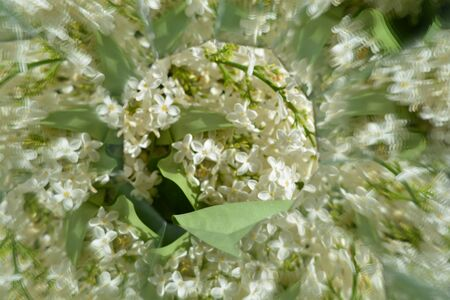 in full bloom: Abstract background,  beautiful flowers, nature, kaleidoscope effect Stock Photo