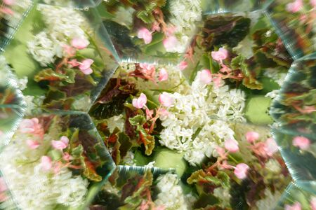 Abstract background,  beautiful flowers, nature, kaleidoscope effect Stock Photo