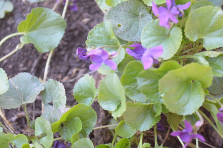 Natural background flowers, leaves, green, nature, color Imagens