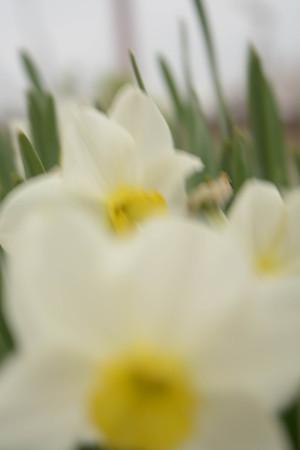 Ausgezeichnet Blätter Färben Blumen Bilder - Ideen färben - blsbooks.com