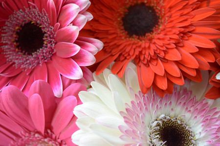 Natural background, flowers, colorful, red, white, pink