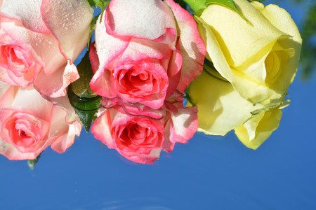 Natural background, flowers, roses