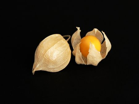 caped: Two caped Physalis fruits, one partially open. Sweet, juicy autumn fruit. Chinese lantern also known as winter-cherry or groundcherry.