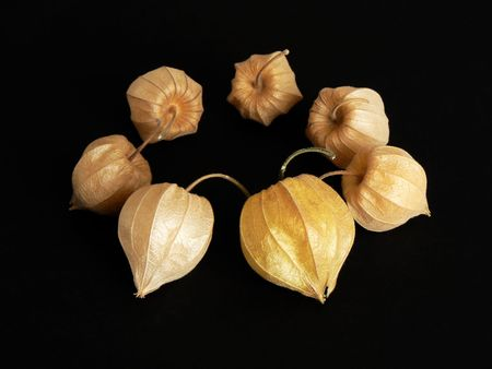 caped: Matured Physalis fruits, arranged in a circle. Focus on the foreground. Edible and decorative autumn fruit.