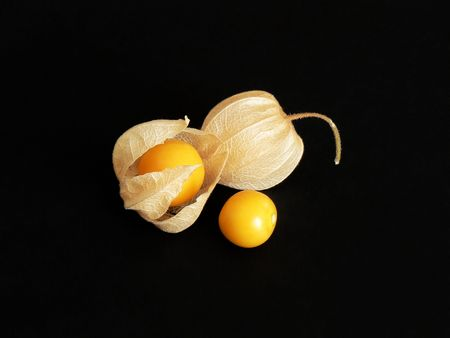 caped: Three matured fruits of Physalis - fully enclosed, partially open and an edible seedhead. Sweet, juicy autumn fruit also known as winter-cherry or husktomato. Stock Photo