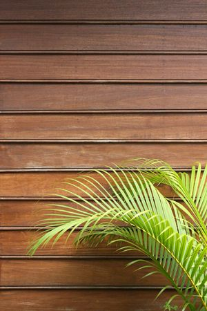 Natural wooden frontface with fresh green palm leaves in the foreground. Space for additional text in the upper half. Vertical perspective. Stock Photo - 2827890