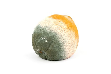 rotten fruit: Moldy rotten orange fruit isolated on pure white