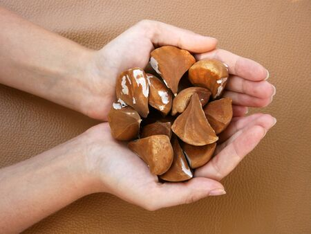 Female hands holding tropical palm seeds Stock Photo