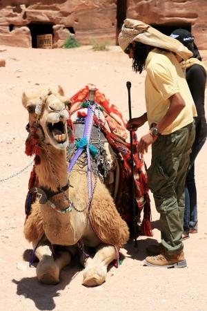 Petra, Jordan - June 18, 2010: A cameleer making his camel ready for tourist rides June 18 in Petra, Jordan.
