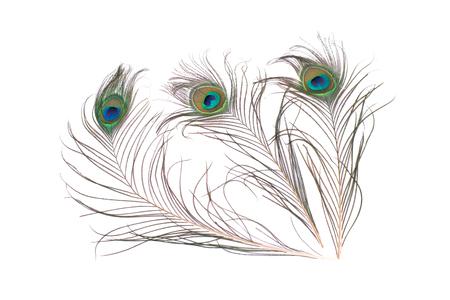 孔雀の羽が白い背景に分離されました。クローズ アップ。