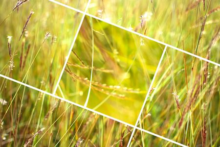 Geometric grass abstract background with triangles and lines. Stock Photo