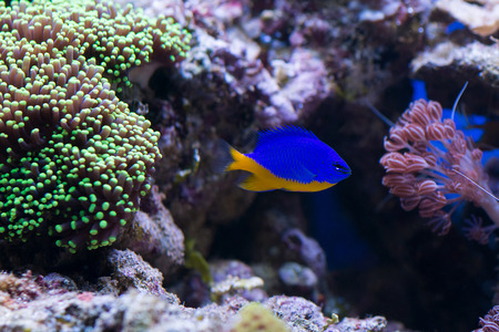reefscape: Coral and fish Stock Photo